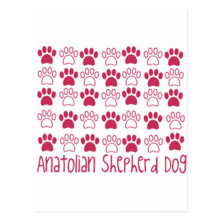 Paw by Paw Anatolian Shepherd Dog Postcard