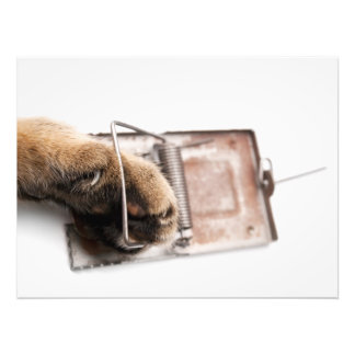 Paw in mousetrap photograph