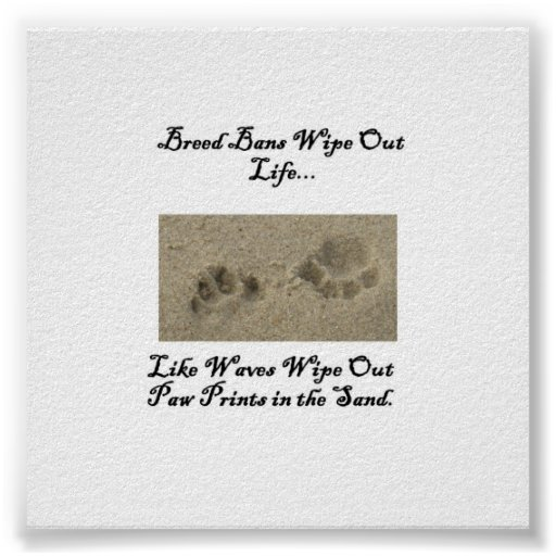 Paw Prints in the Sand Posters