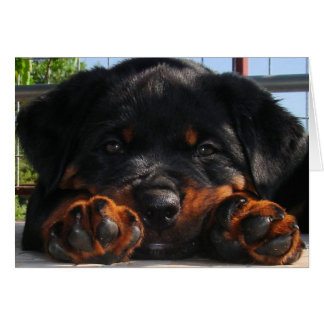 Paws For Thought Greeting Card