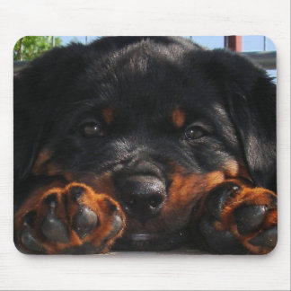 Paws For Thought Mouse Mat