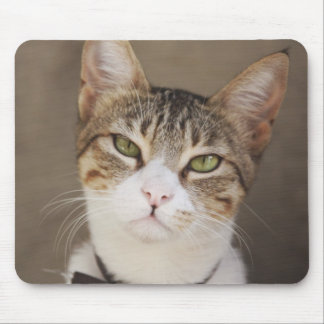 Paws For Thought! Mouse Pad