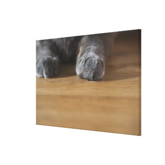 Paws of cat canvas print