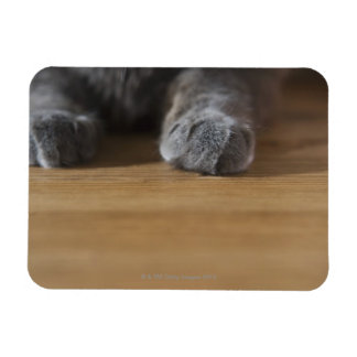 Paws of cat flexible magnet
