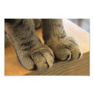 paws photograph