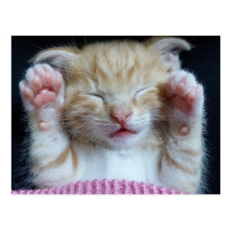 Paws up Kitty Postcard