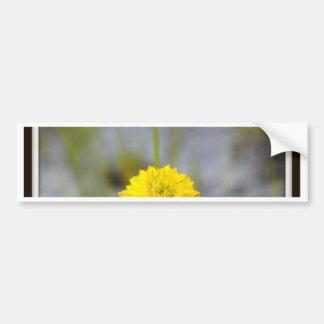Paynes Wildflower Bumper Stickers