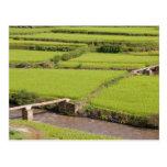 Paysage de rizières à Madagascar Carte Postale