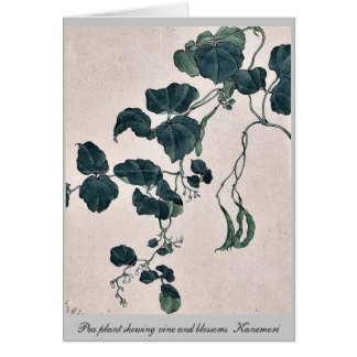 Pea plant showing vine and blossoms  Kanemori Note Card