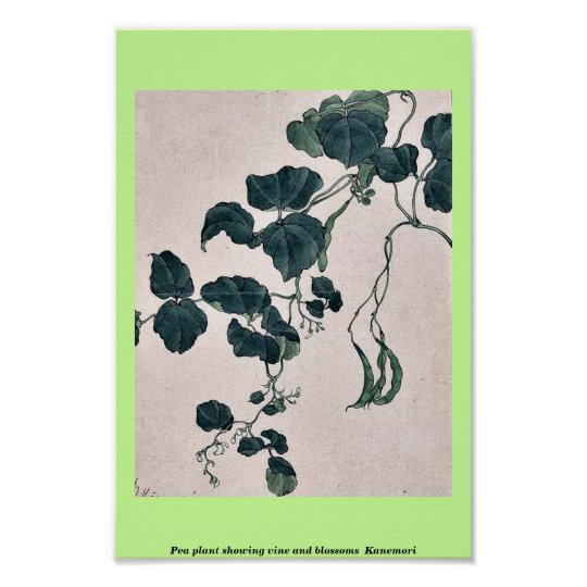 Pea plant showing vine and blossoms Kanemori Poster