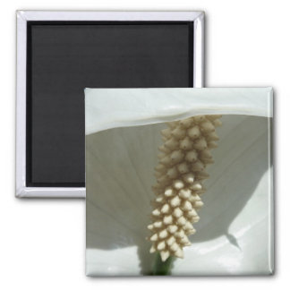 Peace Lily White Flower Square Magnet