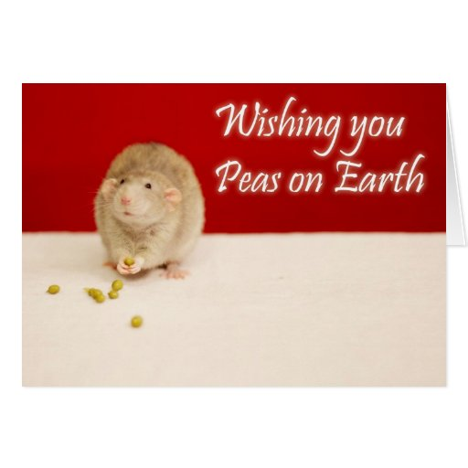 Peace on Earth Christmas Rat Cards