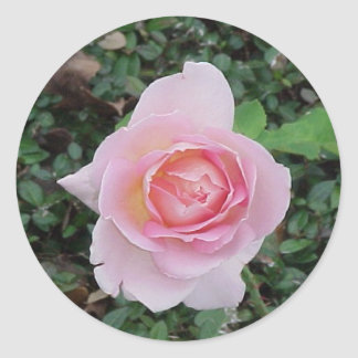 Peace Rose Sticker