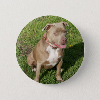 Peaceful Pitbull 6 Cm Round Badge