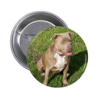 Peaceful Pitbull 6 Cm Round Badge