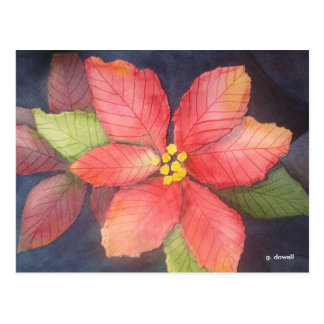Peaceful Poinsettia Postcard