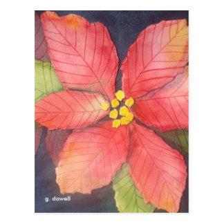 Peaceful Poinsettia Postcard
