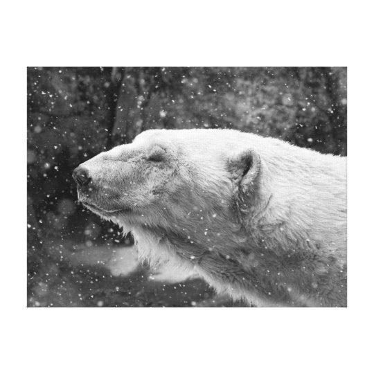 Peaceful Polar Bear Canvas Print