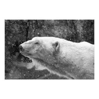 Peaceful Polar Bear Photograph