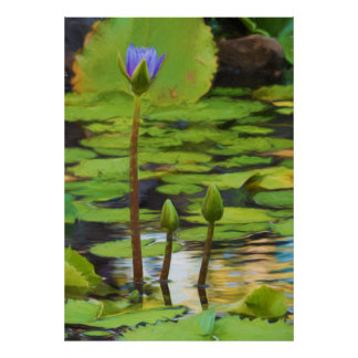 Peaceful Pond- Water Lily Poster