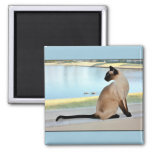 Peaceful Siamese Cat Painting Square Magnet