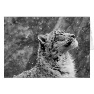 Peaceful Snow Leopard Card