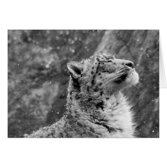Peaceful Snow Leopard Card
