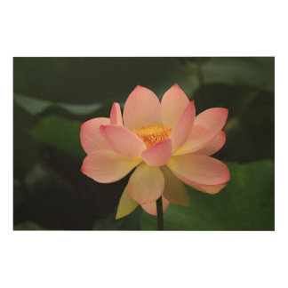 Peaceful Tropical Water Garden Pink Lotus Flower Wood Wall Art