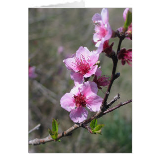 Peach Blossom - Customized Card