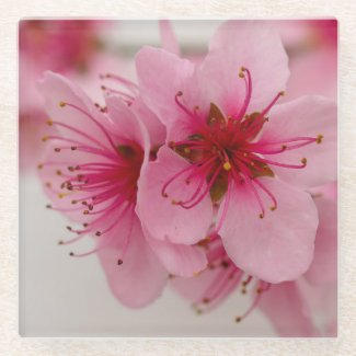 Peach Blossom Floral Glass Coaster