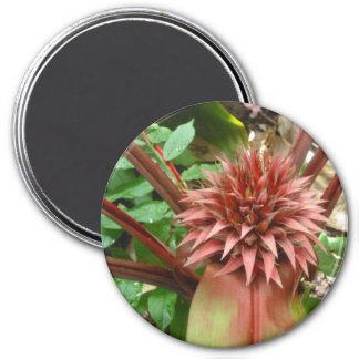 Peach Bromeliad Magnet
