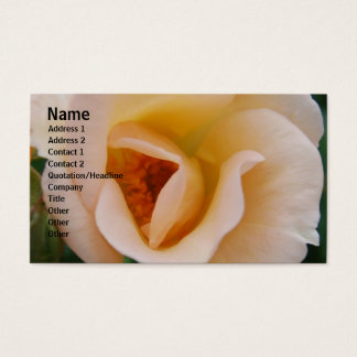 Peach Colored Rose Business Card