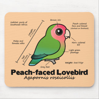 Peach-faced Lovebird Statistics Mouse Pad