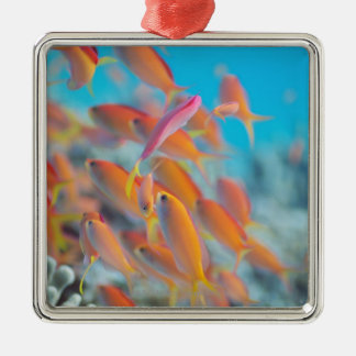 Peach fairy basslet christmas ornament