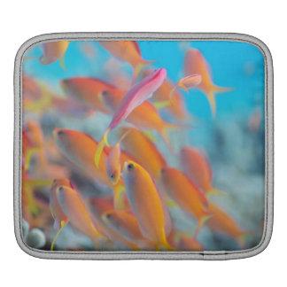 Peach fairy basslet iPad sleeve