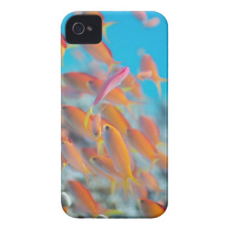 Peach fairy basslet iPhone 4 case