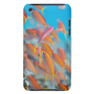 Peach fairy basslet iPod Case-Mate cases