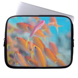 Peach fairy basslet laptop computer sleeves