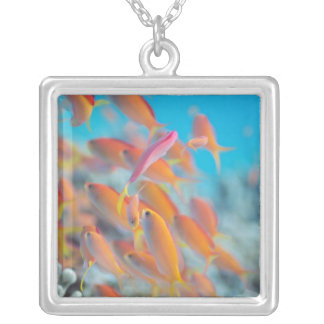 Peach fairy basslet silver plated necklace