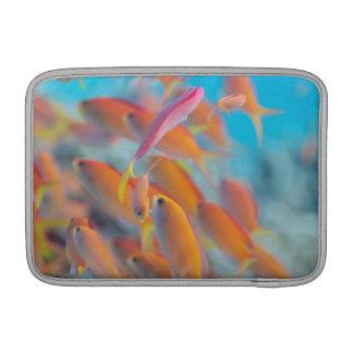 Peach fairy basslet sleeve for MacBook air