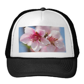 peach flower on tree cap