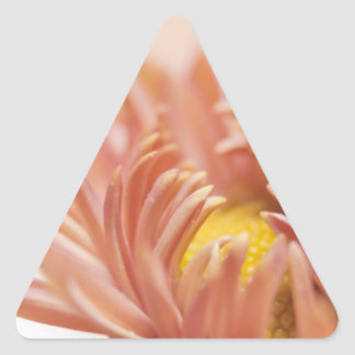 Peach Flower Photograph Triangle Stickers
