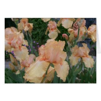 Peach Iris Greeting Card