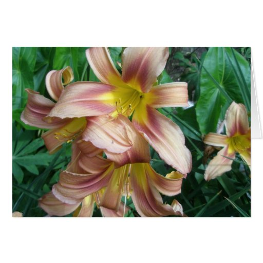 Peach Lily Note Card