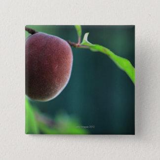 Peach on a peach tree 15 cm square badge