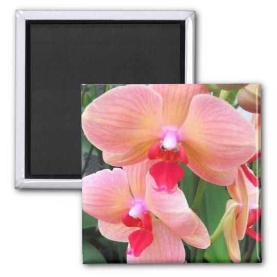 Peach orchids - Magnet