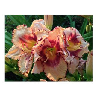 Peach Oriental Lily Flowers Postcard