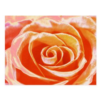 Peach pink blush rose postcard