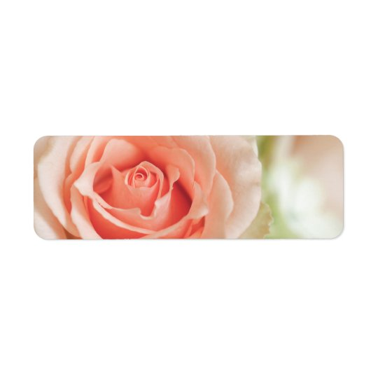 Peach Pink Rose Background Customised