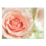 Peach Pink Rose Background Customised Photo Print